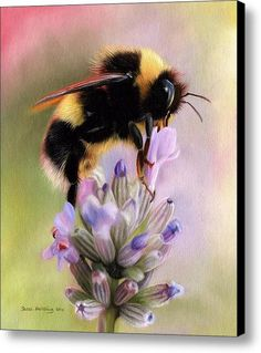 Bumble Bee Canvas Print / Canvas Art By Sarah Stribbling