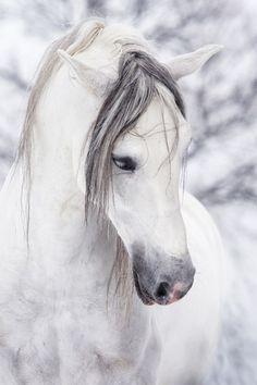 zoo:beyaz