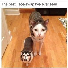 The best face swap