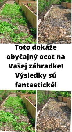 Keď máte svoju záhradu, alebo záhradku, určite si ju užívate v každom smere. Alebo sa o to aspoň snažíte. Čo teda skazí každú radosť všetkým záhradkárom? Neustále sa vracajúca burina, mravce, atď. V dnešnom článku sa dozviete, čo spoľahlivo pomôže. A nielen proti burine. tak poďme na to! Outdoor Structures, Garden, Plants, Garten, Gardening, Plant, Outdoor, Gardens, Yard