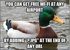 Advice at the Airport from a duck - Imgur