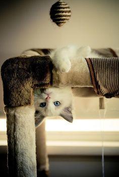 a fat cute playful cat