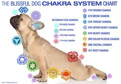 Dog Chakras? Yes, Dogs Have Chakras or Energy Centers Too!The ...