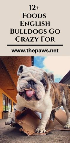 Here are the complete list of the Foods English Bulldogs Go Crazy For: English Bulldogs, French Bulldog, Going Crazy, Thing 1 Thing 2, Cute Dogs, Foods, Pets, Animals, Food Food