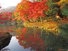 天龍寺の四季:世界遺産 京都 嵯峨嵐山 臨済宗大本山 天龍寺 公式ホームページ