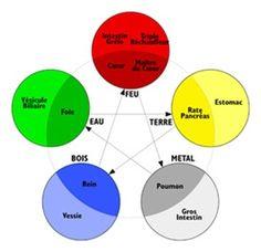 Les 5 éléments et organes associés