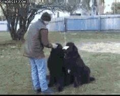 The smartest dog in the world. | 31 GIFs That Will Make You Laugh Every Time