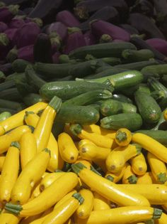 Growing Summer Squash,problems with growing summer squash | Gardening Tips & Ideas