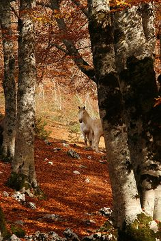 Golden Abruzzo, Italy - Woodland in Fall ...