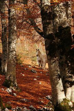 Golden Abruzzo, Italy - Woodland in Fall ...