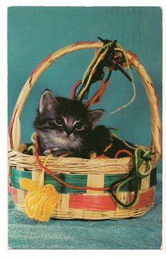BLACK KITTEN in an EASTER BASKET With YARN POSTCARD Cat FREE SHIPPING   eBay  $2.99