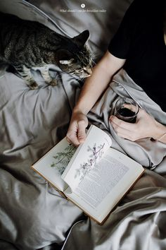 Breakfast in Bed/ photo by what should I eat for breakfast today Crazy Cat Lady, Crazy Cats, Cat Aesthetic, Aesthetic Black, Like A Cat, Norwegian Forest Cat, Sphynx Cat, Breakfast In Bed, Cat Sitting