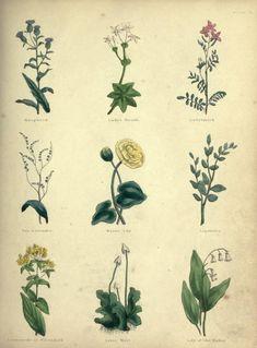 The Complete Herbal by Nicholas Culpeper 1847