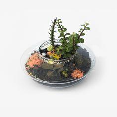 Mini jardim - cactus e suculenta