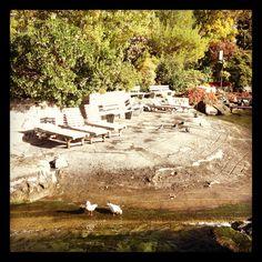 Seagulls in Montreux Riviera Dolores Park, Flora, Travel, Viajes, Plants, Trips, Traveling, Tourism, Vacations