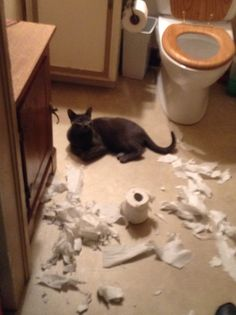 We came home after shopping only to find that the cat had had a party without us  We were very offended and told him how hurtful it was that he didn't invite us