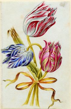 It's About Time: Economics in the Garden - 1600s Watercolors of Tulips by Alexander Marshall (1639-1682)