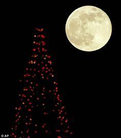 Over the moon: The lunar spectacle that was bigger and brighter than ever (even though most of us missed it) Super Moon, Over The Moon, Full Moon, Outdoor, Bella, Christmas Tree, Photography, Night, Harvest Moon