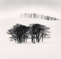 HIlltop Trees, Study 3, Teshikaga, Hokkaido, Japan. 2004