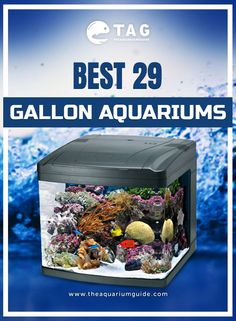 33 best iwagumi aquascaping style tag images aquascaping fish