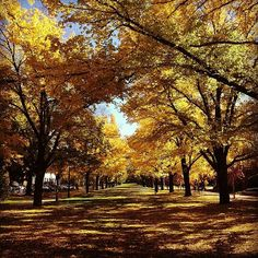 Wow! This photo of autumn leaves at the Australian National University was captured by Instagrammer khawajakhalid.