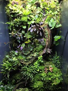 My mini orchid terrarium - -You can find Terrarium and more on our website.My mini orchid terrarium - - Terrariums Gecko, Orchid Terrarium, Terrarium Reptile, Aquarium Terrarium, Terrarium Plants, Terrarium Stand, Dendrobates Terrarium, Ideas Florero, Indoor Garden