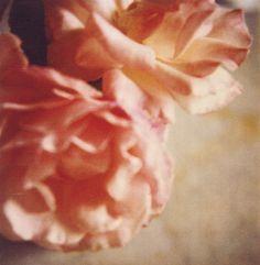 Roses, Gaeta, 2004, Dry-print on cardboard, 43,1 x 27,9 cm