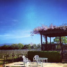 Gazebo of wisteria at Blackjack Winery Vineyard in Santa Barbara wine country ... Photo (c) Anastasia Giorgiova