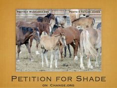 Help the horses and burros from the BLM!!