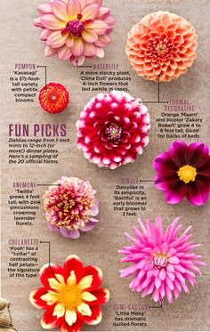 to Plant, Grow and Care for Dahlias Available in thousands (really) of variations, dahlias bloom well into fall—and with just a little post-frost work, can survive for an encore come spring.Available in thousands (really) of variations, dahlias bloom well Cut Flower Garden, Flower Farm, Cut Garden, Zinnia Garden, Flowers For Garden, Hill Garden, Flower Garden Design, Peonies Garden, Garden Pond