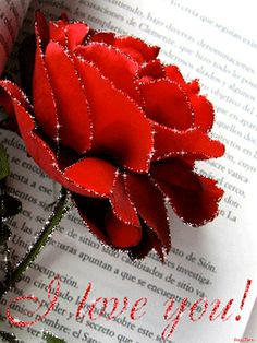 Gif rose rouge i love you When Youre In Love, You Dont Love Me, Gifs, Gif Rose, I Love You Images, Glitter Graphics, Love Letters, Beautiful Roses, Pretty Flowers