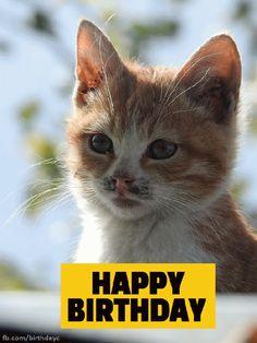 Happy Birthday - Animals - Birthday Greeting #cat #cats