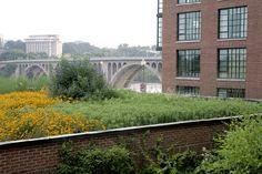 green roof, Washington D.C. Oehme Van Sweden