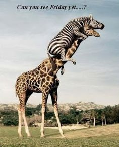 Menagerie Authors: Happy Hump Day!