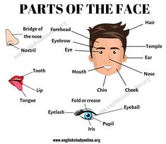 Parts of the Face: List of Useful Face Parts Vocabulary in English - English Study Online English Tips, English English, English Study, English Lessons, Learning English For Kids, English Language Learning, Teaching English, English Vocabulary List, English Grammar Worksheets