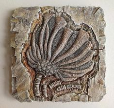Crinoid Fossil, Acrylic Colors, Rocks And Minerals, Fossils, Geology, Art For Sale, Interior Styling, Best Gifts, Art Pieces