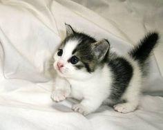 Awwwww Soooo adorable kitty <3 <3