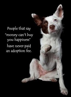 "whoever said money cant buy happiness never paid an adoption fee | ... say ""money can't buy you happiness"" Have never paid an adoption fee"