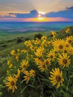Landscape with Douglas' Sunflowers Photo by Don… Washington State, Palouse Hills. Landscape with Douglas' Sunflowers Photo Landscaping Supplies, Landscaping Tips, Texas Landscaping, Terraced Landscaping, Landscaping Company, Zendaya, Photos Black And White, Pretty Landscapes, Low Maintenance Landscaping