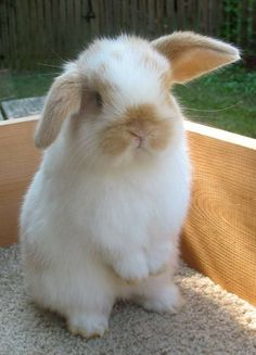 Cute Bunny Pictures, Cute Animal Pictures, Cute Baby Bunnies, Cute Babies, Rabbit Breeds, Rabbit Hutches, Pet Rabbit, Dwarf Rabbit, Tier Fotos