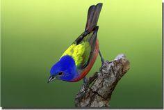 10 самых красивых птиц
