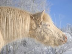 """Happiness Is a Warm Sun  Photograph by Kersti Kalberg, National Geographic Your Shot ~~ Kalberg went for a walk to enjoy the day, as did many others, including the pony, Rainbow, found standing in the sunlight. """"It looked like he was just feeling the sunlight and fresh air. I found it something remarkable, as if he were there for me to finally understand how similar people and animals sometimes are."""""""