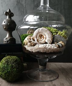 This extra large apothecary jar is filled with live moss, fern-like Selaginella fronds, and a genuine ammonite snail shell fossil.
