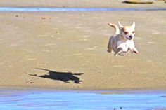 sand, or hover/flying dog/animal, or shadow