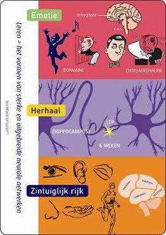 3 breinprincipes