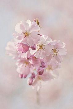 Photo Blossom Borne by Jacky Parker on 500px