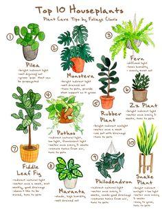 House Plants Decor, Garden Plants, Indoor House Plants, Easy Care Indoor Plants, Best Indoor Plants, Easy House Plants, Common House Plants, Plants For Home, Patio Plants