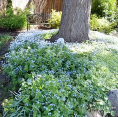Plants for Gardening in the Shade-brunnera-phlox-bishops weed
