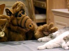 Here kitty, kitty, kitty! Alf's complicated relationship with cats. Le Grand Rex, Complicated Relationship, Sleepy Cat, Old Tv, Classic Tv, Cat Gif, Favorite Tv Shows, Animated Gif, Childhood Memories