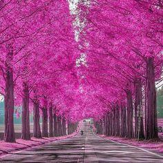 Autumn in Shiga, Japan Photo by Koji Kaneyama Beautiful Roads, Beautiful Landscapes, Beautiful World, Beautiful Places, Wonderful Places, Amazing Places, Beautiful Flowers, Shiga, Pink Nature